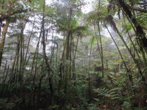 Po stopách dinosaurů v tropickém Kamerunu. (FOTO: Tereza Králová)