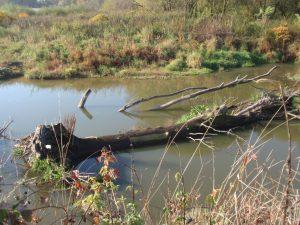 Mrtvé dřevo vkorytě řeky Odry. Jak ovlivňuje chování řeky? Jak dlouho zde je apři jak extrémní události může být přeplaveno dále?